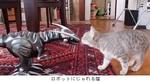 ロボットにじゃれる猫.jpg